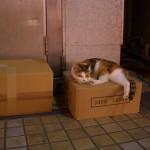 平和通りの猫