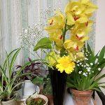 黄色のシンビジウムの切り花