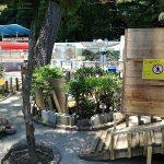 桂浜水族館のリクガメ